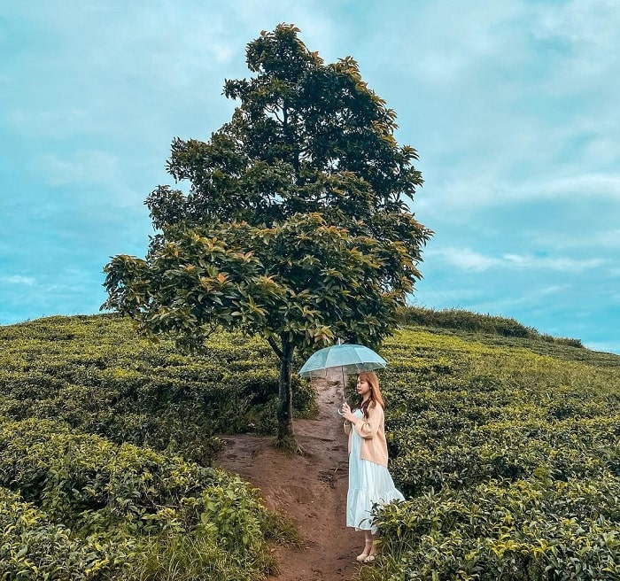 đồi chè Cầu Đất - đồi chè đẹp ở Việt Nam được 'săn lùng' nhiều nhất