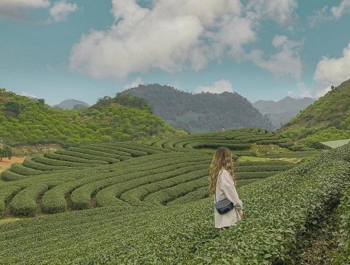 đồi chè Mộc Châu - đồi chè đẹp ở Việt Nam được 'săn lùng' nhiều nhất