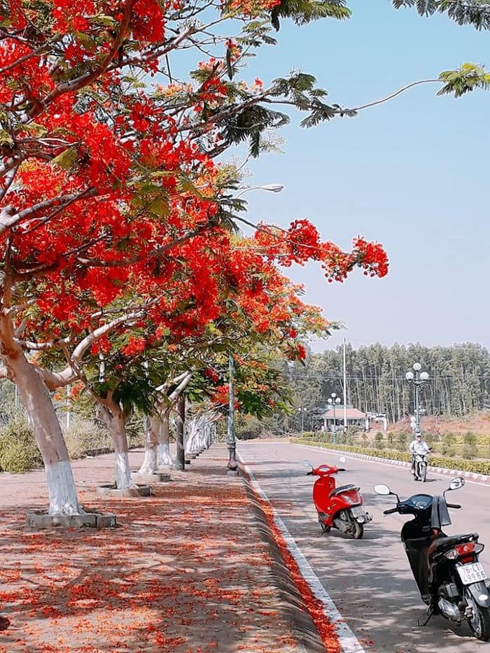 đường hoa phượng đỏ - con đường dẫn đến Biển Lệ Thủy