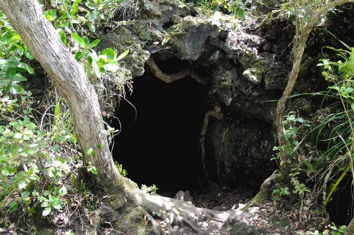 Hang động tạo ra từ dung nham bị khô lại - Hướng dẫn du lịch đảo Rangitoto ở New Zealand