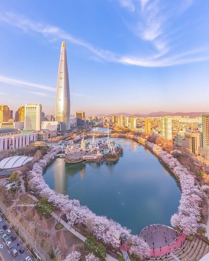 Seokchon Lake is a beautiful place to see cherry blossoms in Korea