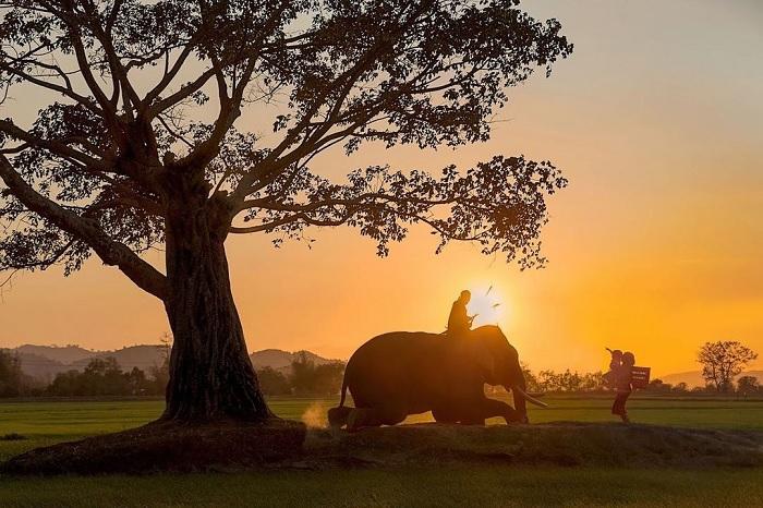 hoàng hôn - khoảnh khắc đẹp tại cây cây cô đơn ở Đắk Lắk