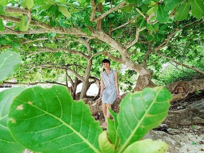 vườn cây - điểm thu hút của Đảo Khỉ Cát Bà