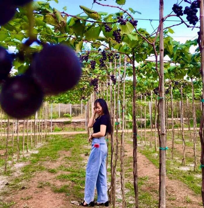 mùa hè - thời điểm lý tưởng ghé thăm vườn nho Long Khánh Đồng Nai