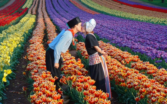 Lễ hội hoa Hà Lan lễ hội đặc sắc ở Châu Âu
