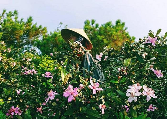 hoa sim - nét thú vị trên thảo nguyên Bùi Hui