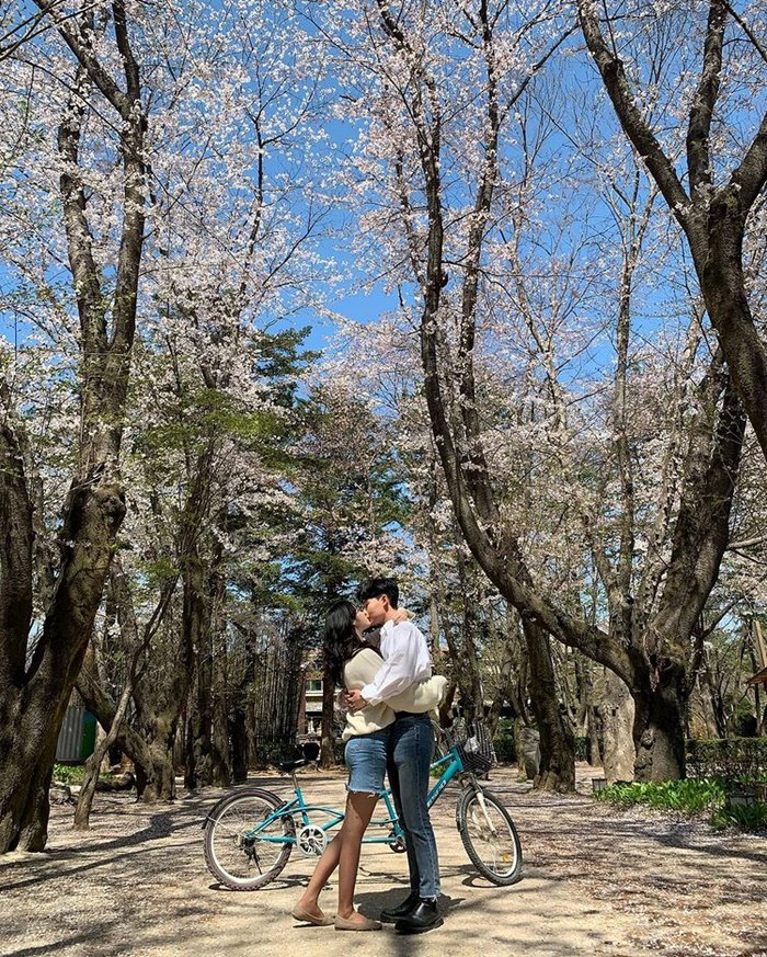 Nami is a beautiful place to see cherry blossoms in Korea