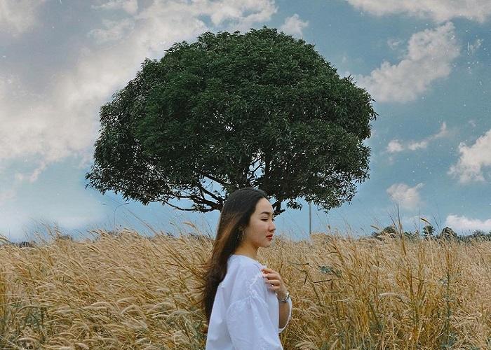 Những cây cô đơn ở Đắk Lắk đang làm 'chao đảo' cộng đồng sống ảo