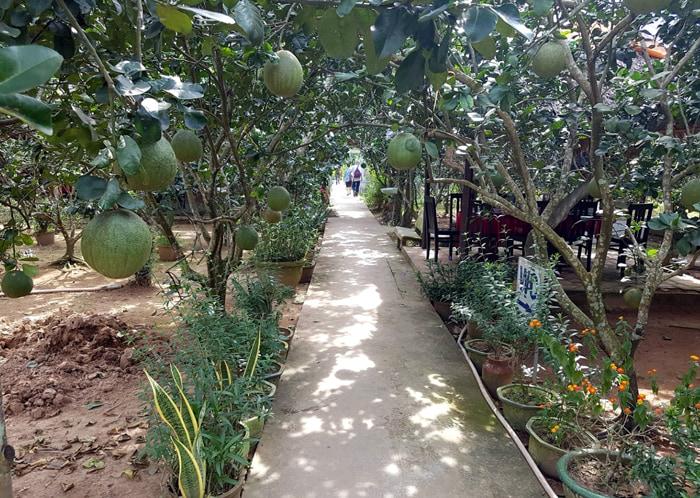 Check in Quy Ben Tre islet - Fruit gardens