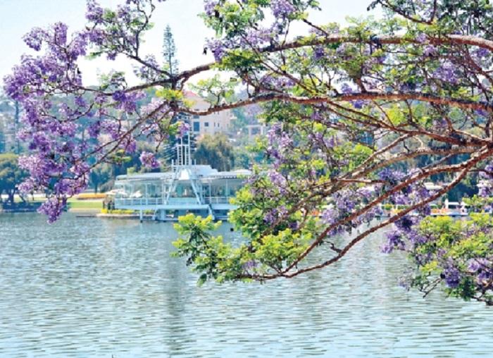 Hồ Xuân Hương mùa phượng tím Đà Lạt