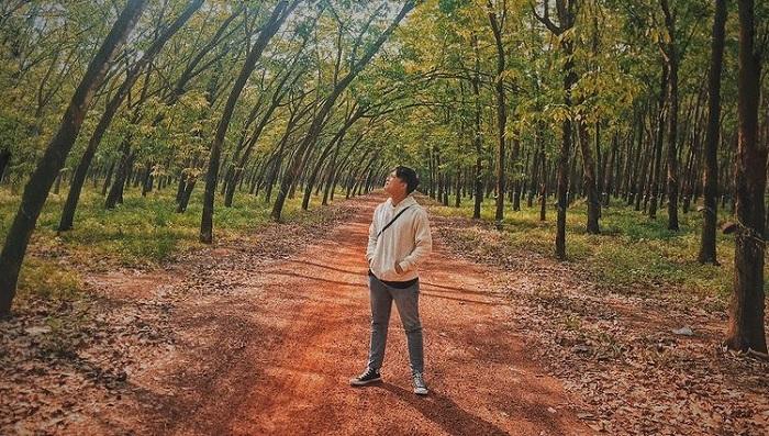 mùa thay lá - mùa đẹp nhất tại rừng cao su ở Tây Ninh