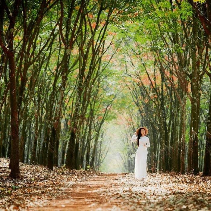 áo dài trắng - trang phục chụp với rừng cao su ở Tây Ninh