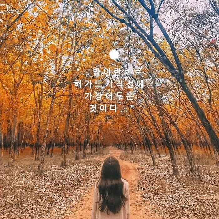 sống ảo - hoạt động thú vị tại rừng cao su ở Tây Ninh