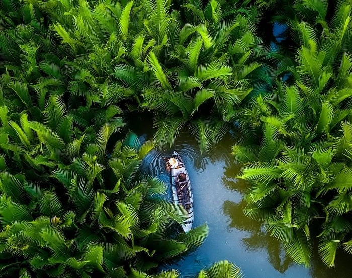 green color - the beauty of the nipa forest in Quang Ngai