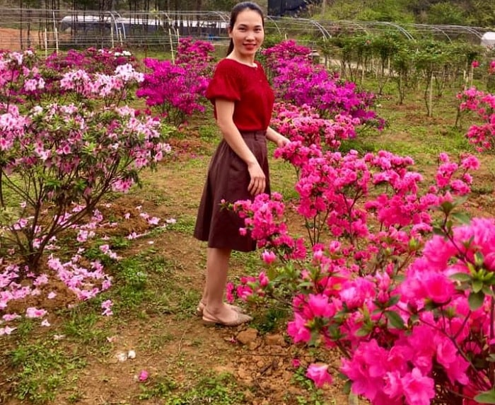 pink - the main color of the rhododendron forest in Cao Bang