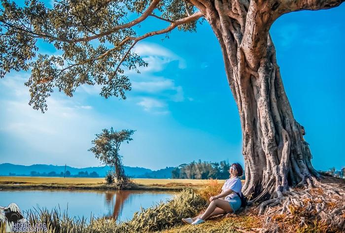 Những cây cô đơn ở Đắk Lắk hot hit - cây cô đơn gần hồ lắk