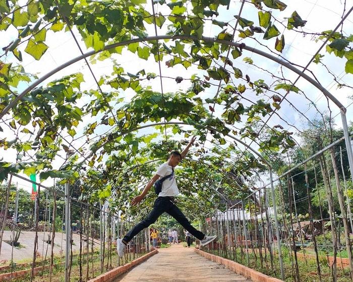 lối vào - điểm thu hút của vườn nho Long Khánh Đồng Nai