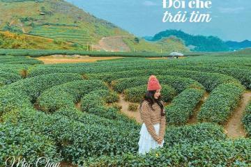 'Lượn' một vòng Việt Nam ngắm những đồi chè đẹp như thơ