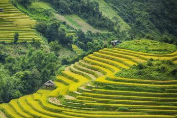 Đến Tuyên Quang ngắm vẻ đẹp ngoạn mục trên ruộng bậc thang Hồng Thái
