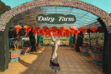 Một ngày thử 'trồng rau, nuôi bò' tại trang trại bò sữa Dairy Farm Mộc Châu