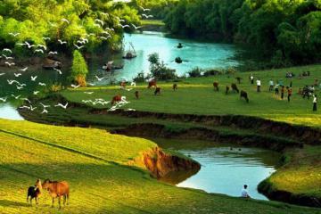 Khám phá vườn cò Hải Lựu - điểm du lịch hấp dẫn ở Vĩnh Phúc