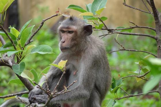 Đến vườn quốc gia Bái Tử Long tìm hiểu hệ sinh thái độc đáo