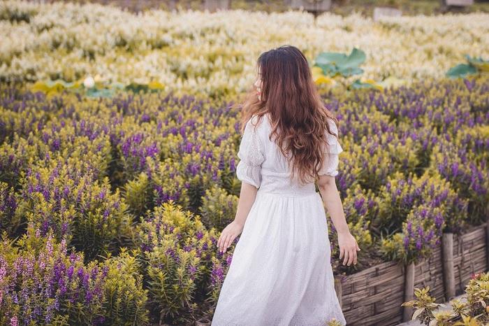 lãng mạn - khung cảnh mùa thu ở Thung lũng hoa hồ Tây
