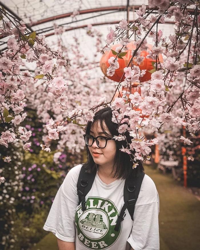 hoa đào - đặc sản mùa xuân ở Thung lũng hoa hồ Tây