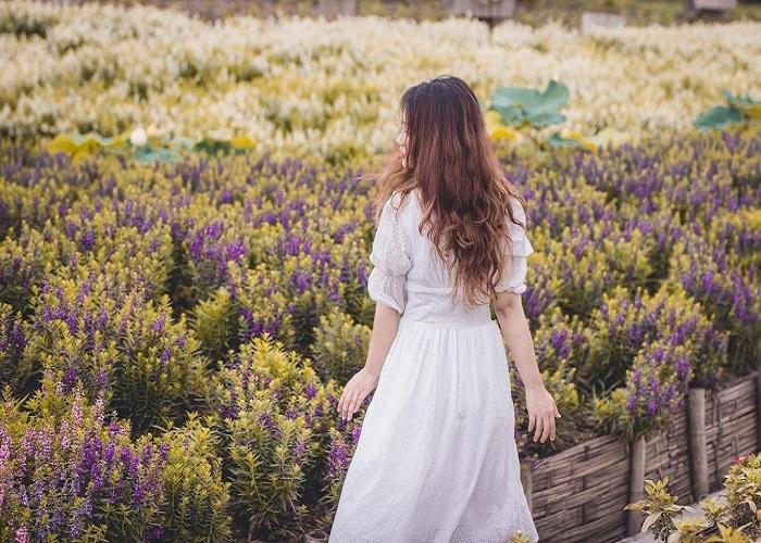Có một 'thiên đường sống ảo' đỉnh cao ở Hà Nội mang tên Thung lũng hoa hồ Tây!