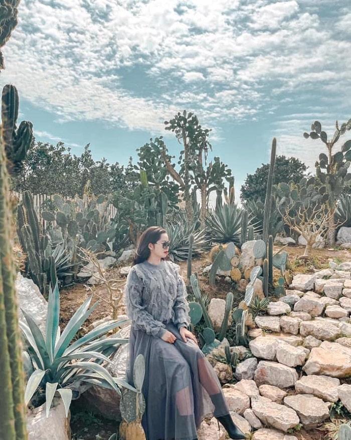 Vườn xương rồng Cactizone - tọa độ sống ảo đẹp ở Hà Nội