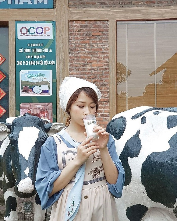 Trải nghiệm thú vị ở trang trại bò sữa Dairy Farm