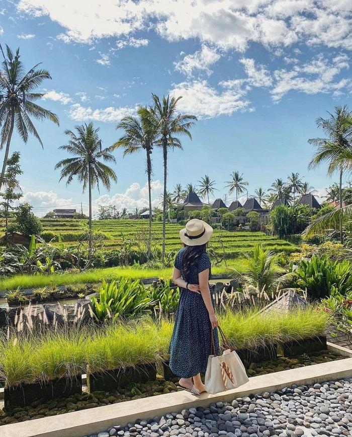 Ubud là nơi có những cánh đông lúa biểu tượng - Cách lựa chọn khu vực lưu trú tại Bali