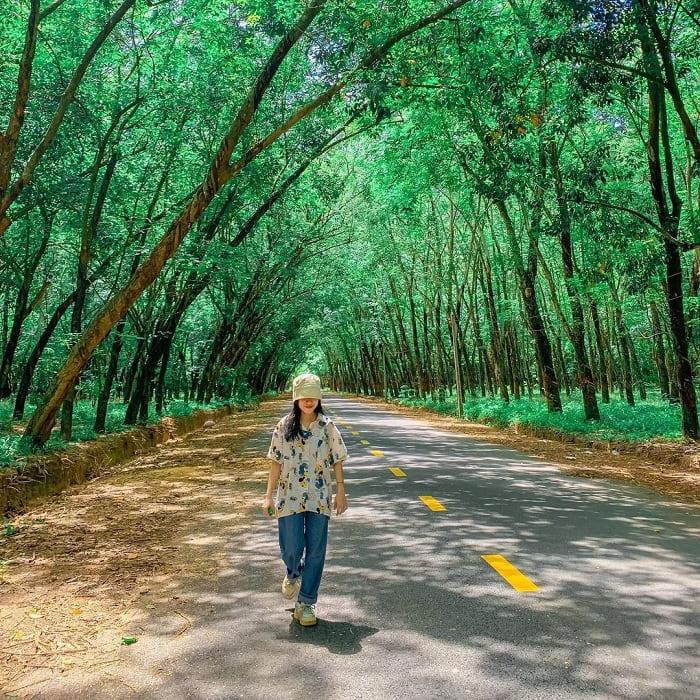 mùa hè xanh mướt - điểm thú vị của rừng cao su ở Tây Ninh
