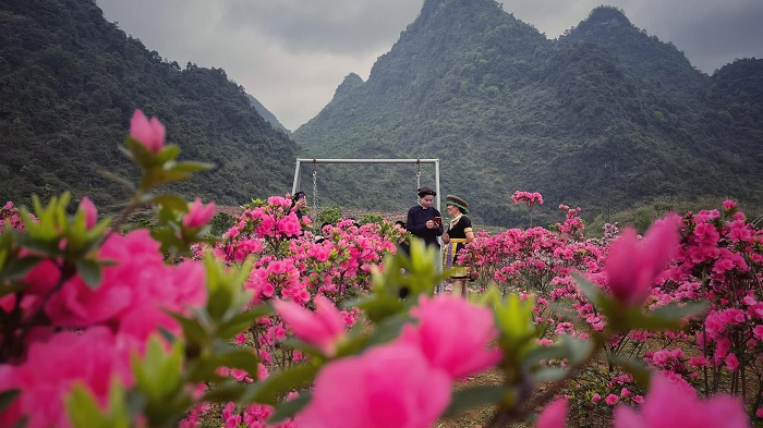 photographer - a highlight at the azalea forest in Cao Bang