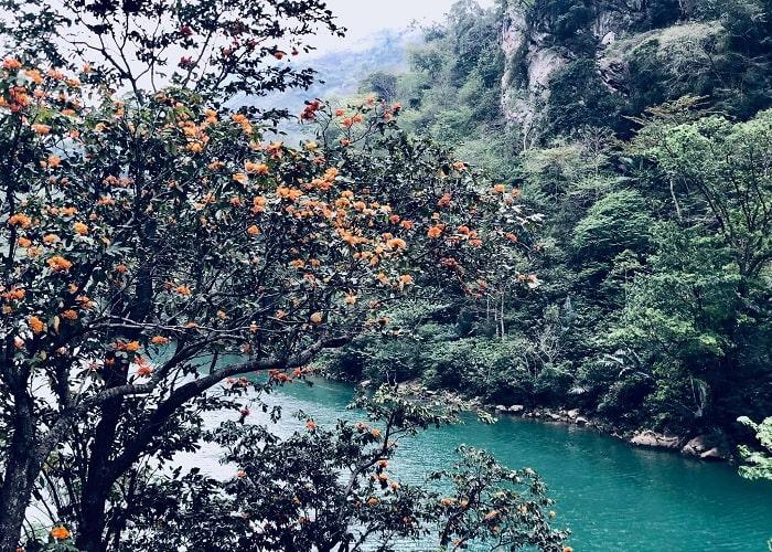 mùa hoa gạo - thời điểm đẹp tại sông Gâm Cao Bằng