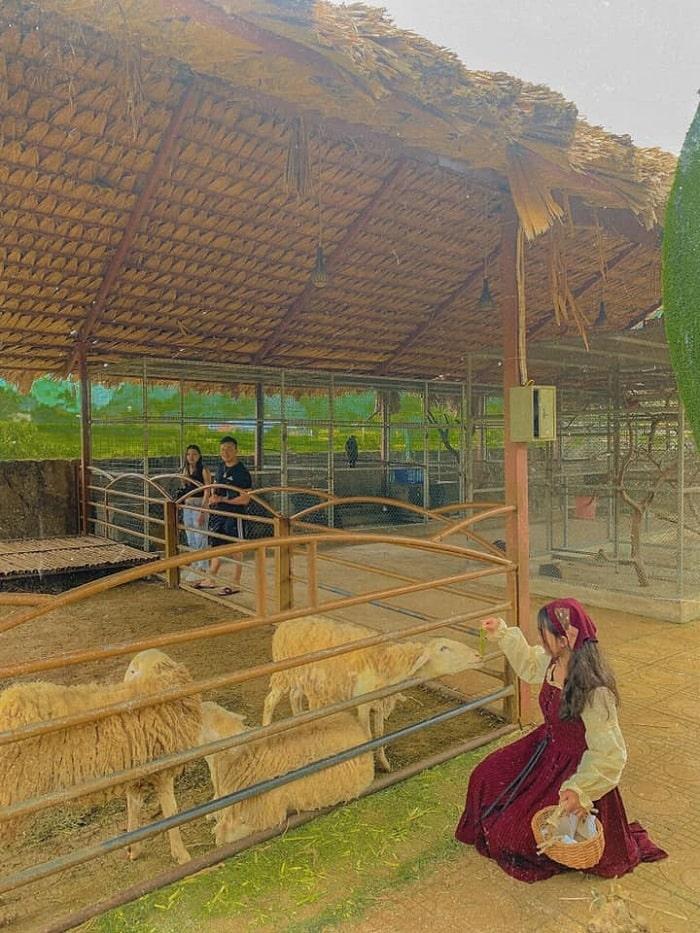 Hoạt động thú vị tại trang trại bò sữa Dairy Farm
