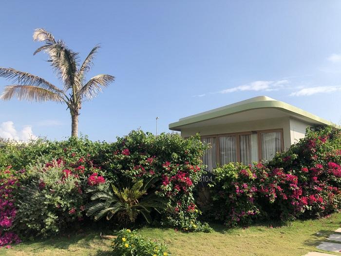 Lối vào biệt thự là hàng hoa giấy rực rỡ sắc màu - Review FLC Resort Quy Nhơn