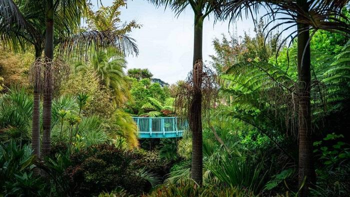 Một khu vườn nhiệt đới tươi tốt - Tham quan vườn Hamilton