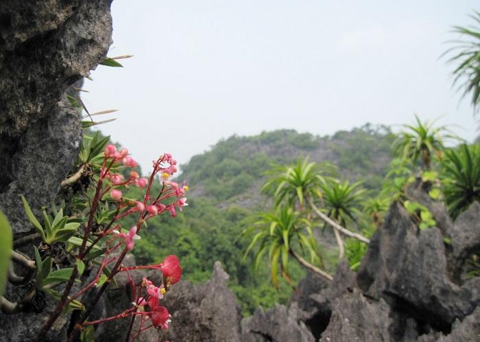 Bai Tu Long National Park - sightseeing