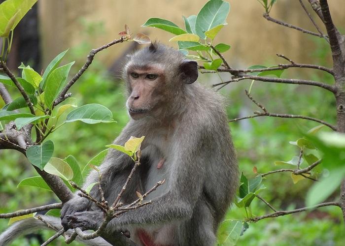 Bai Tu Long National Park - fauna