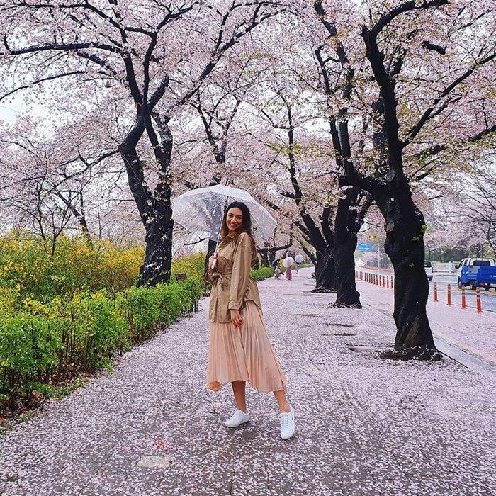 Yeouido beautiful cherry blossom viewing spot in Korea