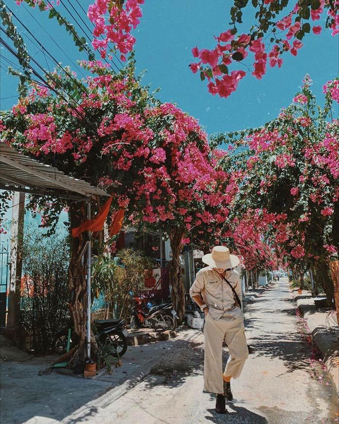Con đường hoa giấy đẹp nhất Nha Trang 10