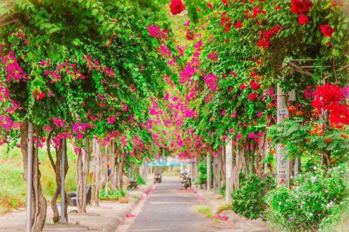 Con đường hoa giấy đẹp nhất Nha Trang 2