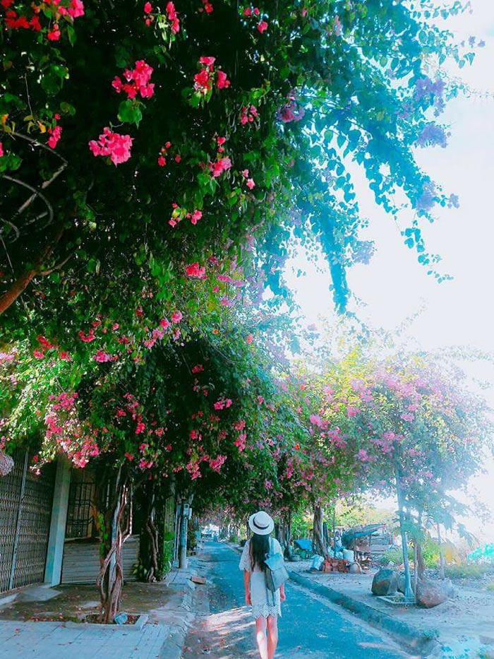 Con đường hoa giấy đẹp nhất Nha Trang 6