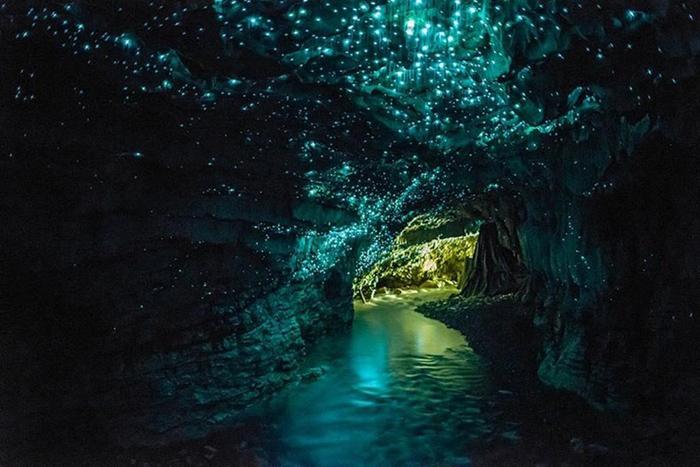 hang động đom đóm Waitomo