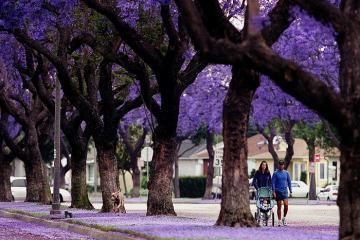 Tất tần tật kinh nghiệm du lịch Nam Phi hữu ích nhất cho khách du lịch