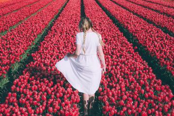 Khám phá lễ hội hoa tulip ở Hà Lan