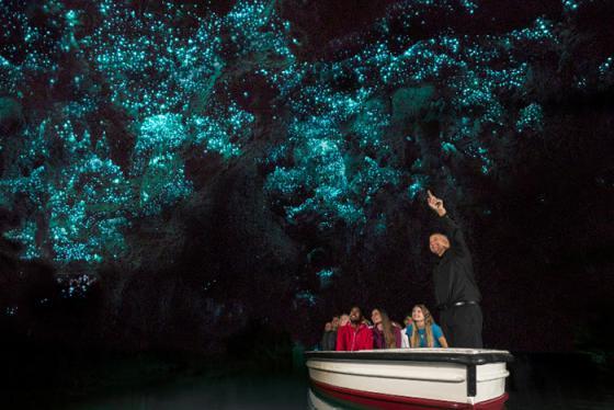 Lạc lối trước xứ sở thần tiên tại hang động đom đóm Waitomo - New Zealand