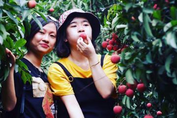 Du lịch Bắc Giang mùa vải chín 'thổn thức' vị ngọt thanh và sắc đỏ quyến rũ khắp mọi ngả đường