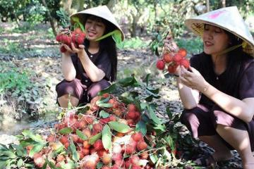 Nhanh chân check in vườn trái cây Vĩnh Kim đang độ vào mùa